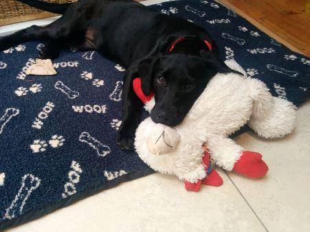Mia puppy2